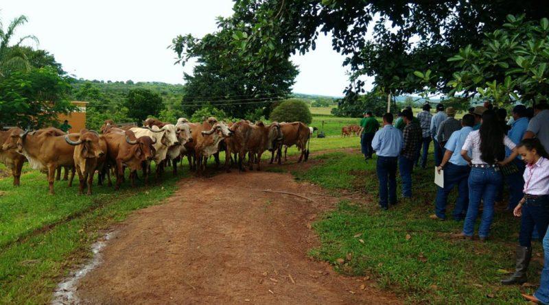 Dia de Campo mostra potencial genético no rebanho leiteiro em Gurinhatã